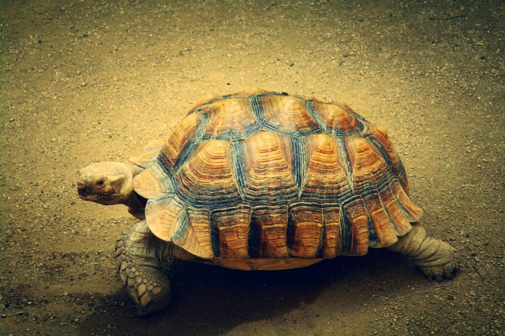 """Konkurs Fotograficzny pt.: """"Zwierzęta w obiektywie"""""""